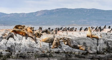 Argentina 'The Wildlife of Patagonia'