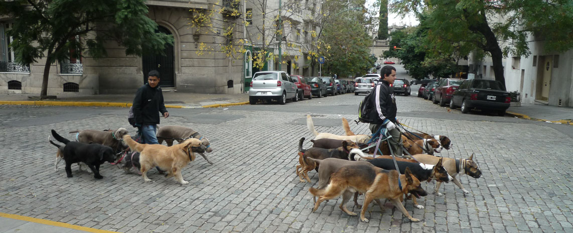 Walking the dogs, Buenos Aires