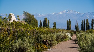 Bodegas of Mendoza