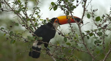 Brazil - themes - birdwatching