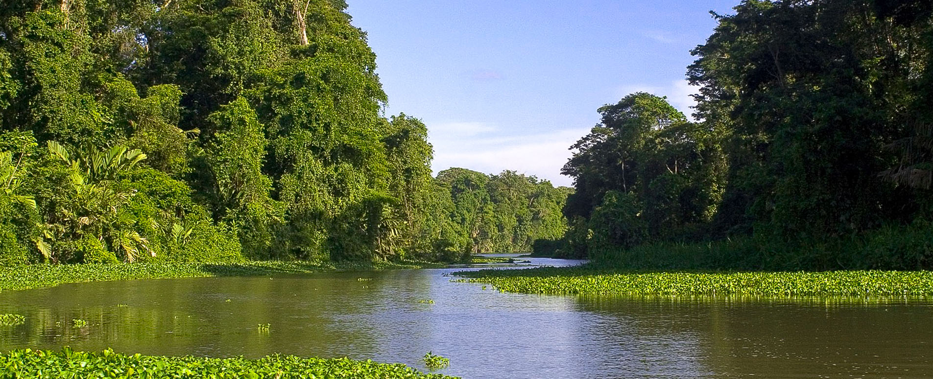 costa rica flooded forest