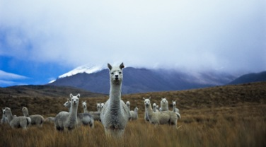 Ecuador & Galapagos 'Among Mountains'