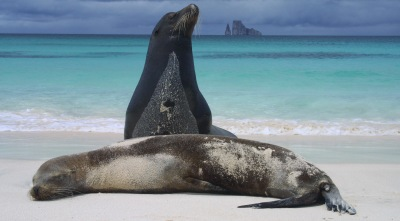 Tailor-made holidays to the Galapagos Islands