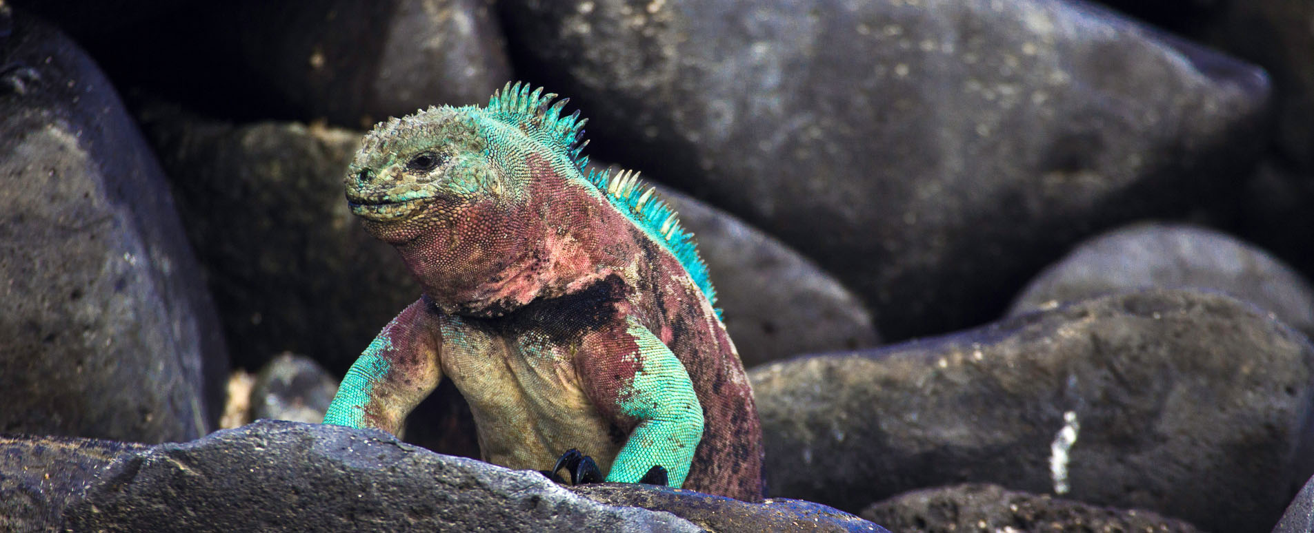 galapagos wildlife holidays