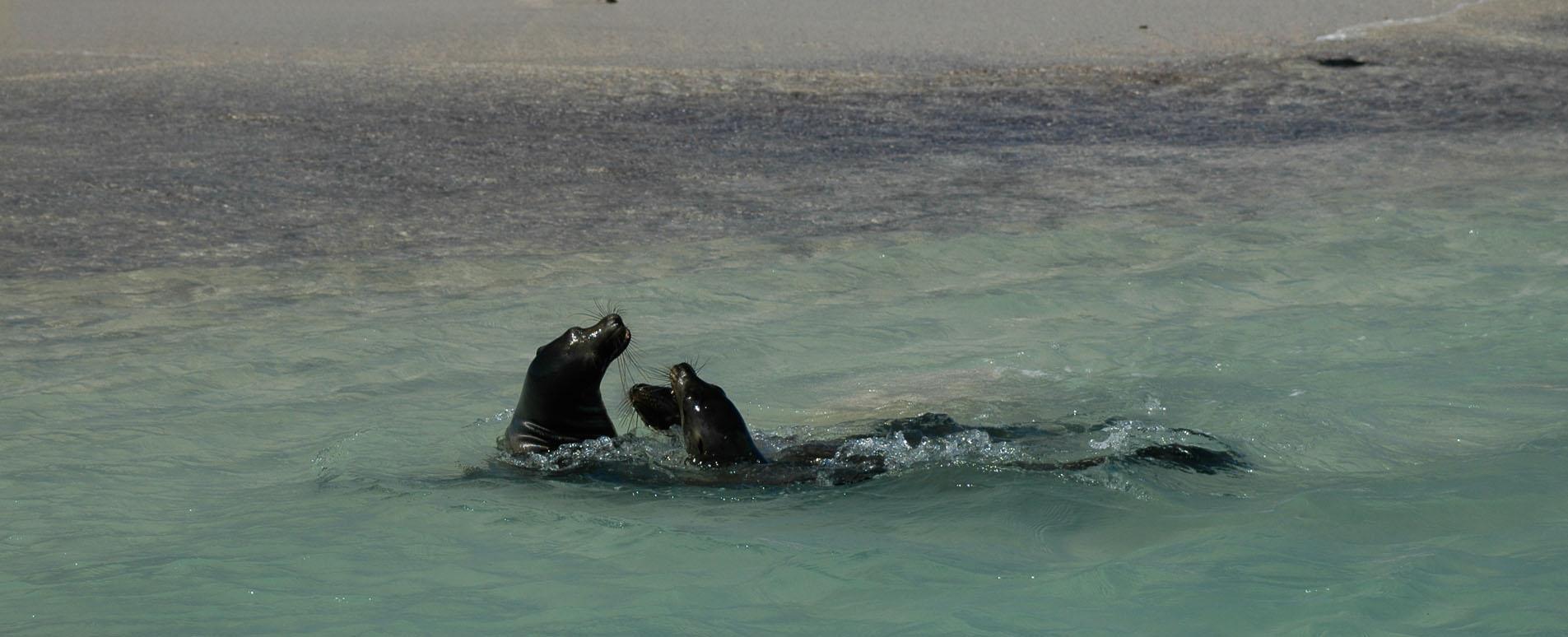 Wildlife Cruises To The Galapagos Islands Geodyssey